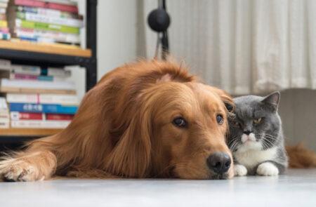 Diabete em cão e gato
